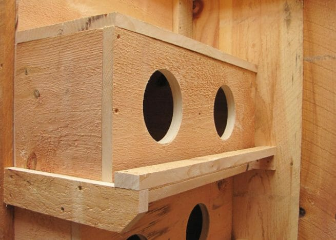 Nesting-Boxes-Chicken-Coop-accessories-hen-house-nest-box