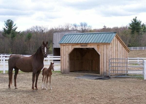 Our post and beam horse run in shed is the sturdiest barn you can buy