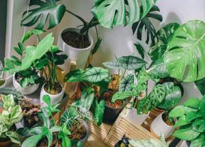 How to care for indoor platns