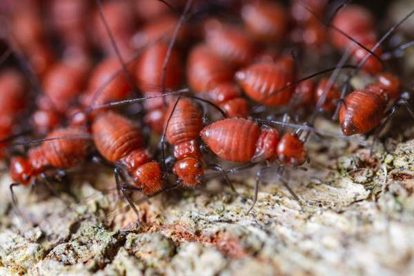 Set your post and beam building up for success by following these termite deterrent guidelines.